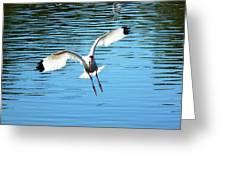 Landing Ibis Greeting Card