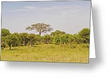 Landscape In Botswana Greeting Card