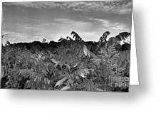 Landscape In Contrast Greeting Card