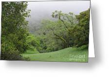 Landscape In Fog Greeting Card