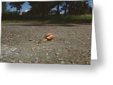 Landscape Of The Snail Greeting Card