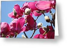 Landscape Pink Magnolia Flowers 46 Blue Sky Magnolia Tree Greeting Card