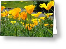 Landscape Poppy Flowers 5 Orange Poppies Hillside Meadow Art Greeting Card
