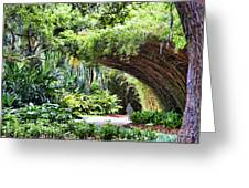 Landscape Rip Van Winkle Gardens Louisiana  Greeting Card