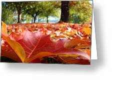 Landscape Trees Park Art Prints Autumn Fall Leaves Baslee Troutman Greeting Card
