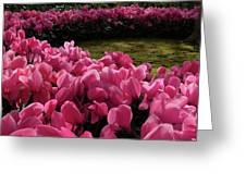 Lane Of Pink Greeting Card