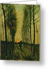 Lane Of Poplars At Sunset Greeting Card