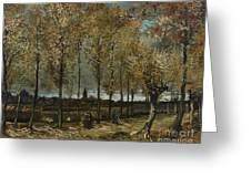 Lane With Poplars Greeting Card
