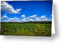 Lanesboro Fields Greeting Card