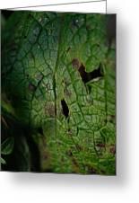 Languid Leaf Greeting Card