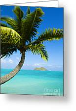 Lanikai Palm Greeting Card