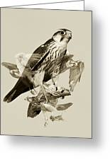 Lanner Falcon Collage Greeting Card