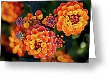 Lantana Blooms Greeting Card