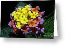Lantana Flower Chips Greeting Card