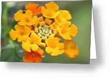 Lantana Flower Greeting Card