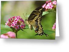 Lantana Taste Greeting Card