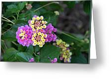 Lantanna's Blooms Greeting Card