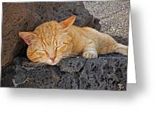 Lanzarote Ginger Greeting Card