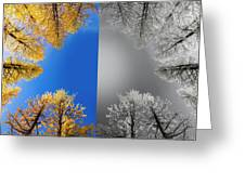 Larches Color To Black And White Reflection Greeting Card