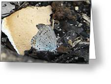Large Blue Butterfly Greeting Card