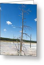 Large Dead Standing Tree In Hot Springs  Greeting Card