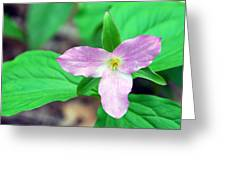 Large Flower Trillium Greeting Card