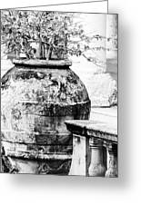 Large Flowerpot - Black And White Greeting Card