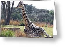 Large Giraffe Greeting Card