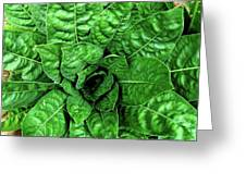Large Green Display Of Concentric Leaves Greeting Card