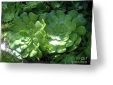 Large Green Succulent Plants Greeting Card