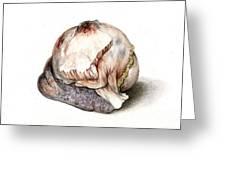 Large Hyatid Cyst In Spleen Greeting Card