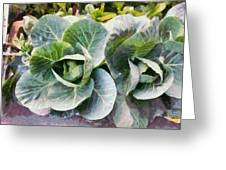 Large Leaves Of A Cabbage Plant Greeting Card