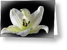Large Lily-1 Greeting Card