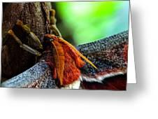 Large Moth Macro Greeting Card