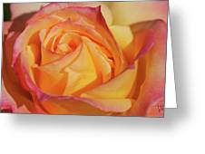 Large Peace Rose Center 006 Greeting Card