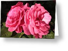 Large Pink Roses Greeting Card