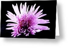 Large Purple Chrysanthemum-1 Greeting Card