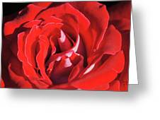 Large Red Rose Center - 003 Greeting Card