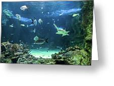 Large Sawfish And Other Fishes Swimming In A Large Aquarium Greeting Card