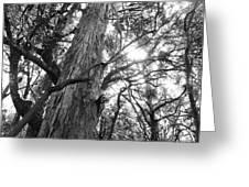 Large Tree Greeting Card