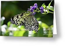 Large Tree Nymph Polinating Dainty Purple Flowers Greeting Card