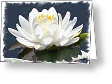 Large Water Lily With White Border Greeting Card