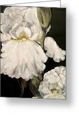 Large White Iris Greeting Card