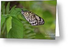 Large White Tree Nymph Butterfly On Green Foliage Greeting Card