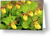 Large Yellow Lady's Slipper  Greeting Card