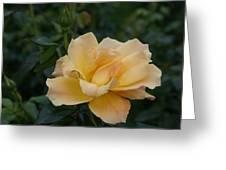 Large Yellow Rose II Greeting Card