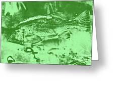 Largemouth Bass 9 Greeting Card