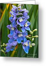 Larkspur And Lady Friend Greeting Card