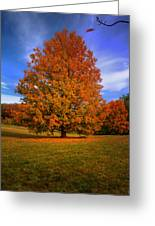 Last Call Of Fall Greeting Card