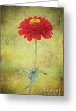 Last Days Of Summer Greeting Card